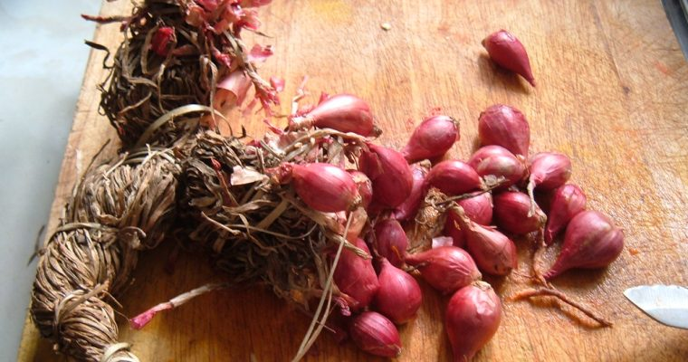 How Long Do Shallots Last? Can They Go Bad?