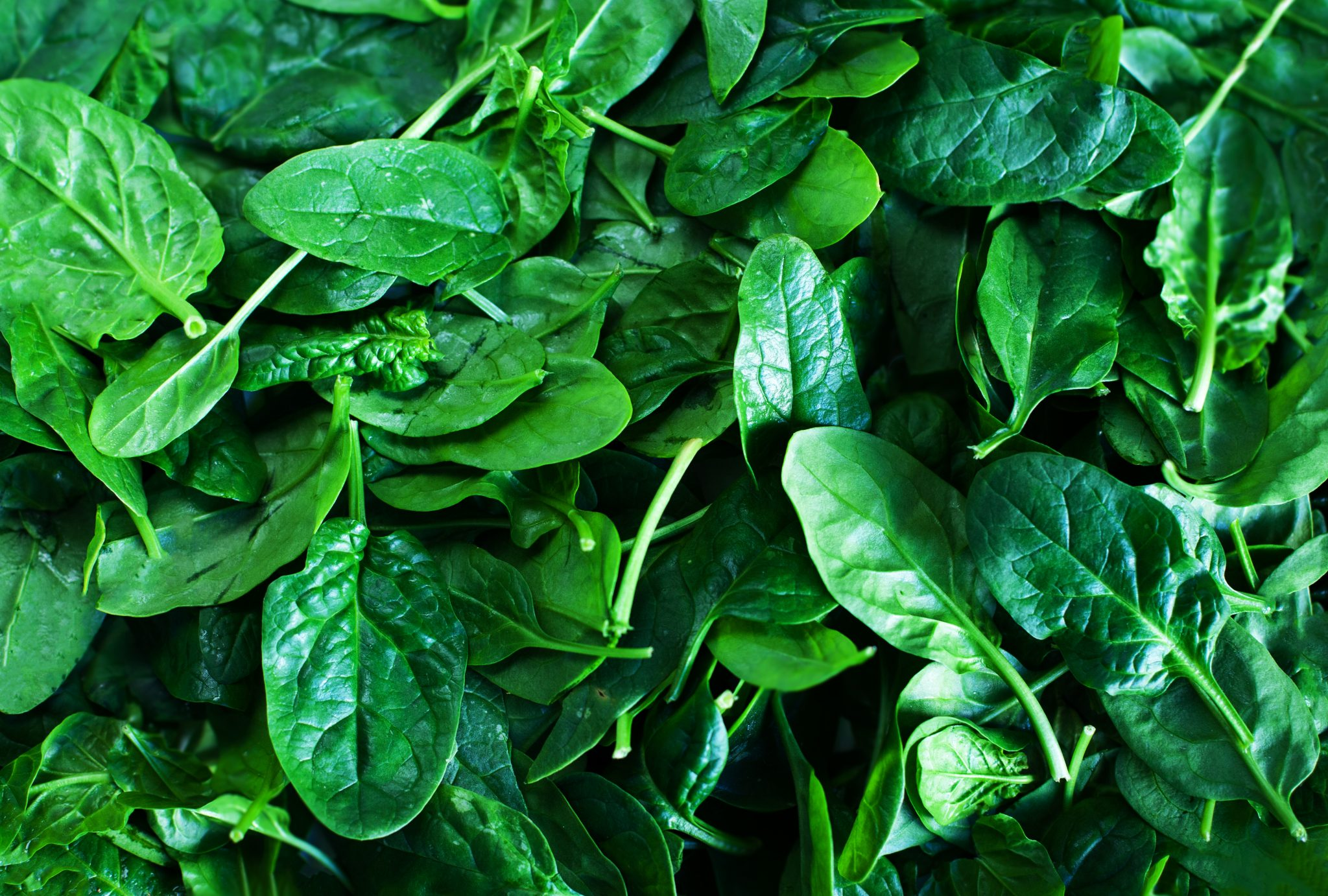 How Long Does Spinach Last? Can it Go Bad?
